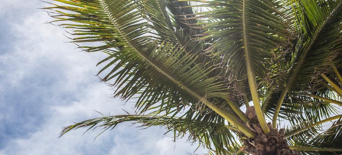 Florida Rundreise - 10 Tipps für den perfekten Urlaub im Sunshine State